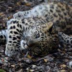 Tallinna loomaaia külastajad saavad piletiostuga toetada liigikaitsetegevust maailmas