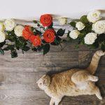 Head rahvusvahelist kasside päeva! Kas mäletad neid kuulsaid kasse?