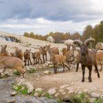Tallinna loomaaed tähistab 81. sünnipäeva loodushariduspäevaga - vaata kaarti siit!
