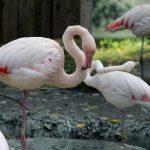Tallinna loomaaia õueala avatakse külastajatele 19. mail