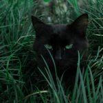 Loomade varjupaikades algab musta kassi kuu